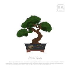 "Bonsai tree in pot on white background. Text in japanese: ""Bonsa"
