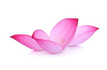 lotus flower petal on white background