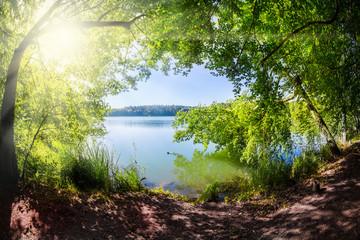 Zelfklevend Fotobehang Diepbruine ein Waldsee im Land Brandenburg ( Deutschland ) bei Sonnenschein