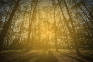 Wall Mural - Forrest at the Sunlight