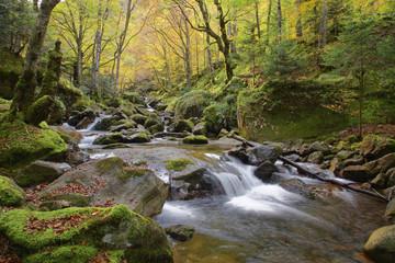 Belles couleurs d'automne dans les pyrénées