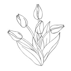 vector monochrome contour illustration of tulip flower bouquet