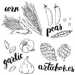 hand drawn set of graphic vegetables garlic peas corn artichokes with handwritten words on white background