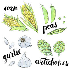 hand drawn set of watercolor vegetables garlic peas corn artichokes with handwritten words on white background