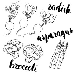 hand drawn set of graphic vegetables radish asparagus broccol