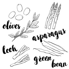 hand drawn set of graphic vegetables olives green bean leek a