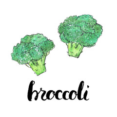 hand drawn watercolor vegetables broccoli with handwritten words