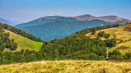 summer meadow on hillside of mountain range
