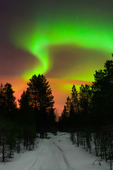 Winter night landscape with forest and polar northern lights. Kola Peninsula, Murmansk region