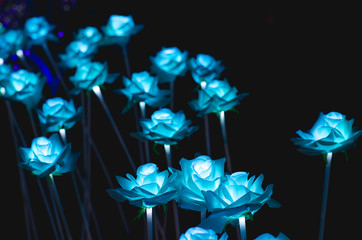 The flowers have a light night