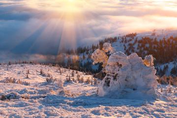 Garden Poster winter Carpathians landscape, Europe mountains, wonderful world.