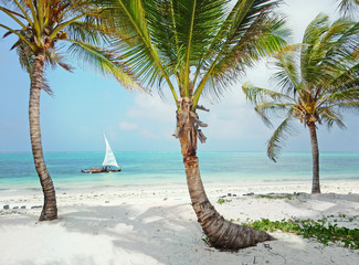 Tropical white beach with palm trees