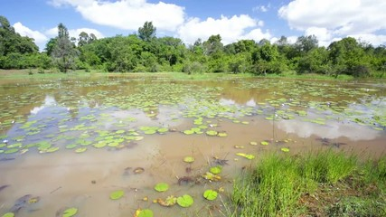 Wall Mural - Water lilies on the beautiful Lily Lake in Karura Forest, Nairobi, Kenya with blue sky.