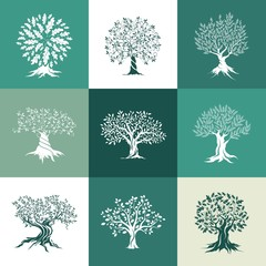 olive and oak trees silhouette isolated on color background