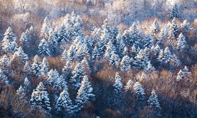 Winter forest and sunlight