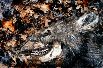deer skull #1