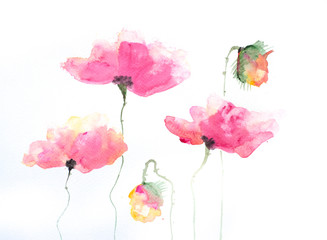 Stylized poppy flowers painting on white, Impressionism style