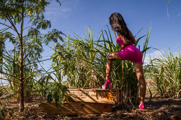 Sexy woman with short pink skirt and pink high shoes in nature with army wood box, beautiful ass and black long hair