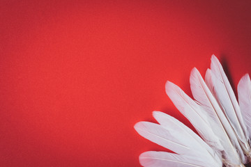 White feather, red background