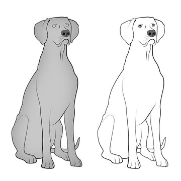 Dogs - Weimaraners