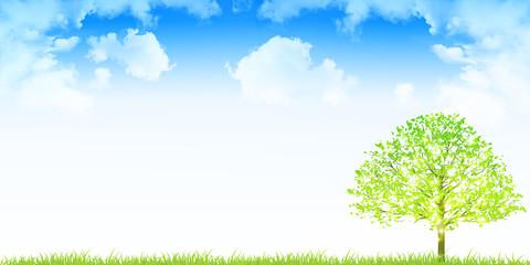 新緑 木 空 背景