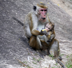 Mother and monkey