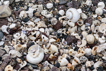 colored stones shells and seaweed on the shore