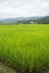 Beautiful rice terraces at Ban Pa Pong Pieng, Mae chaem, Chaing