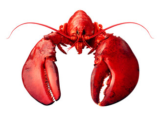 Lobster Front View