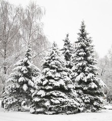 Christmas tree in snow outdoors