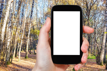 smartphone with cut out screen and autumn forest