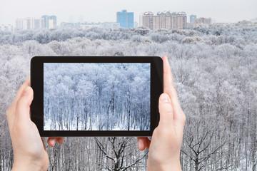 photo of frozen trees in urban park in winter