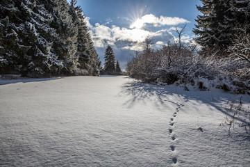 Fußspuren eines Tieres bei fallendem Schnee auf dem Lupfen