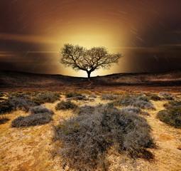 cratère volcan arbre silhouette planète sécheresse changement