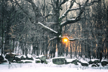 Winter snowy forest at sunset with yellow sun shining through the trees, Tuscany, Italy