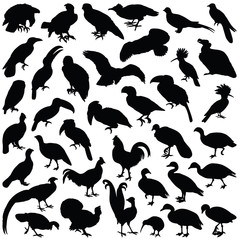 Bird collection - vector silhouette