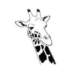 Giraffe head - vector illustration