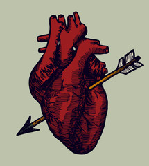 real red human heart with arrow valentines day drawing vector.