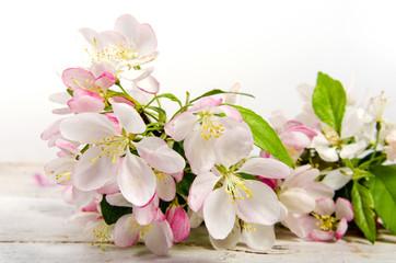 Glückwunsch, alles Liebe:  Kirschblüten vor weißem Holz :)