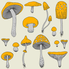 Set of Forest mushrooms - vector hand drawn sketch. Collection of different mushrooms with roots, real eatable and poisonous boletus
