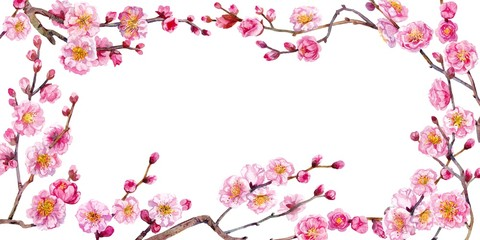 Blossom branches of Japanese plum. Watercolor.