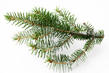 Christmas fir tree branch for decorate on the white background. Winter ideas.