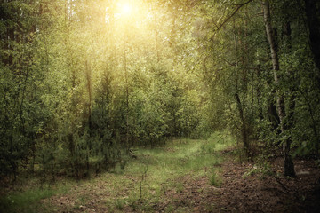 Dark moody forest with path, green trees and light, natural outdoor vintage background