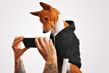 Cute doggie in casual streetwear clothes curiously watches a video on a black smartphone held by a man with tattooed arms on white background