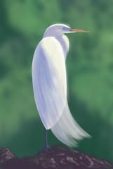 American Egret/ digital painting / illustration.