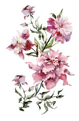 Expanded pink peonies on white background.  Watercolor painting. Hand drown. Vertical orientation. Can be used in greeting cards, wallpapers, fabric, wrapping paper