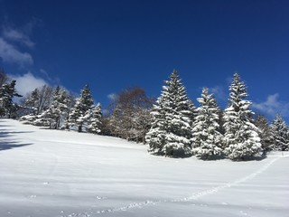 Chute de neige et sapins