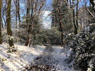 Waldweg im leicht verschneiten Wald