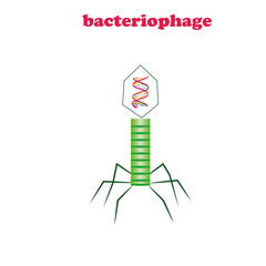 Bactierio phage virus isolated.