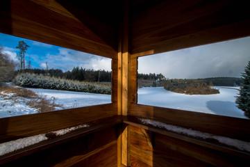 Forest Windows